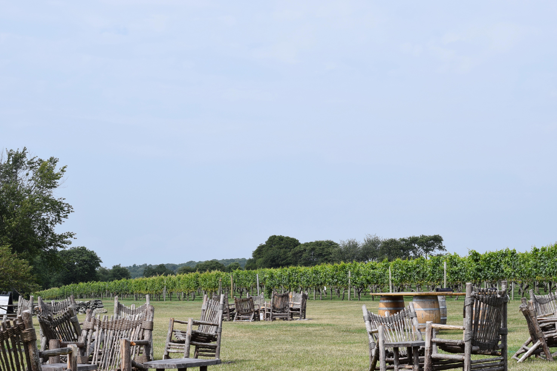 vineyard10